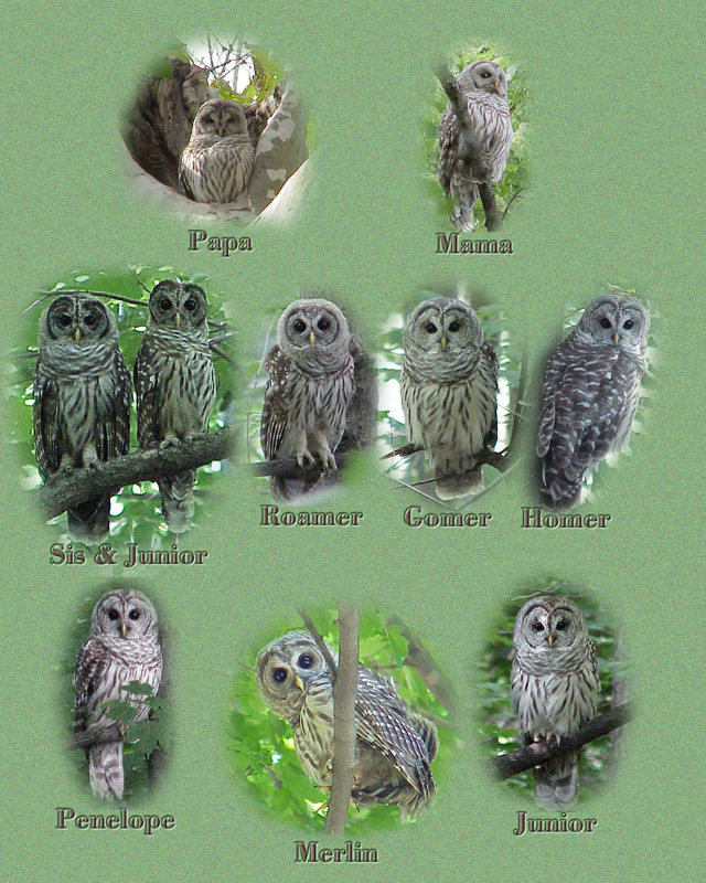 Colored Pictures Of Owls Owl Family Background Colorful Flat Design o